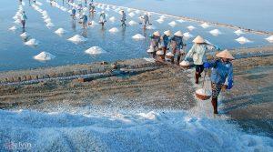 Nghề làm muối Ninh Thuận