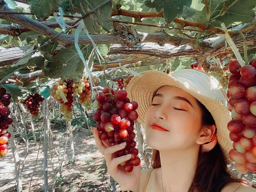 Các vườn nho ở Ninh Thuận